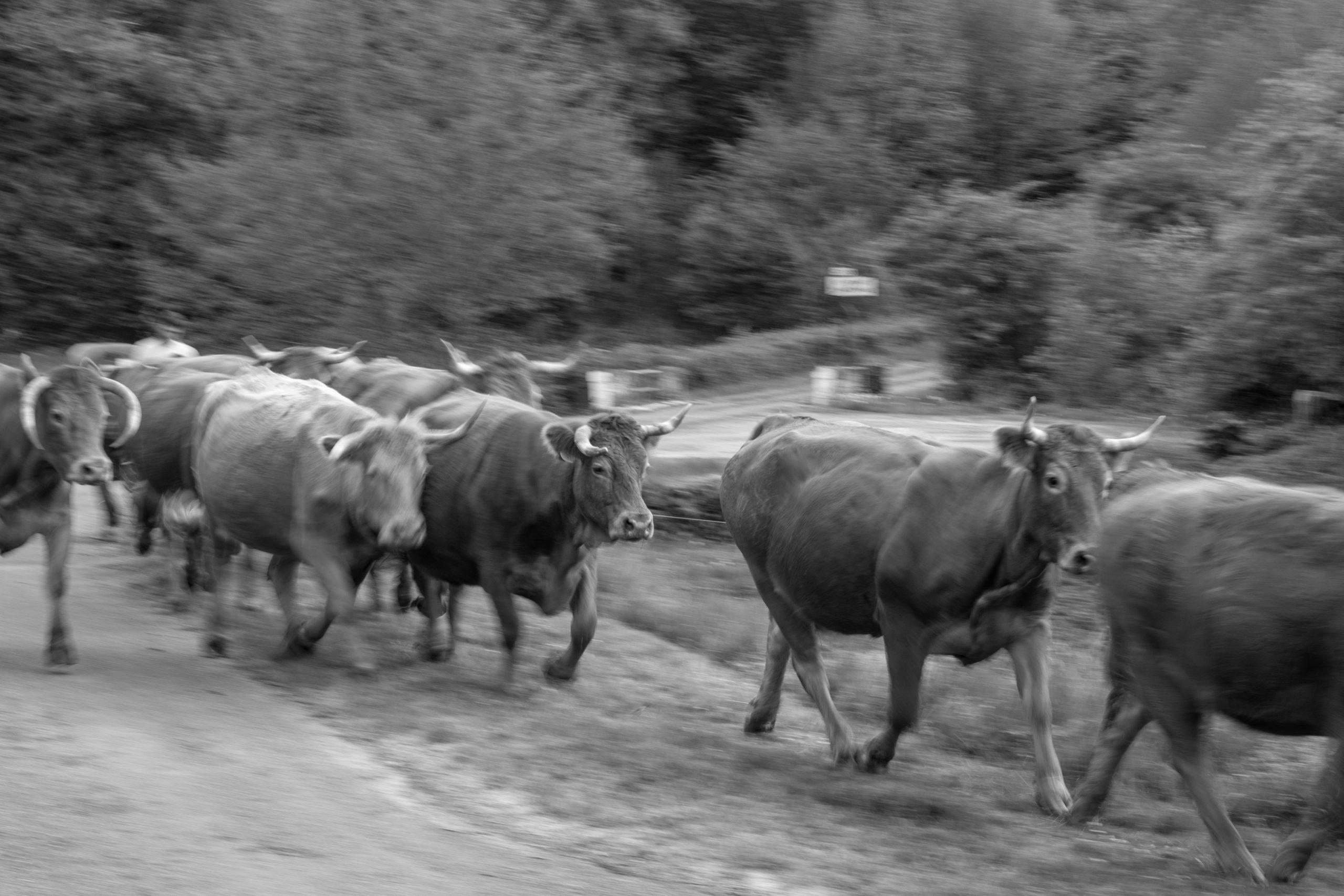 Ferme agricole 6